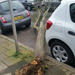 If only all trees were as considerate as this one... #StormImogen https://t.co/0rZ9SoEFn2