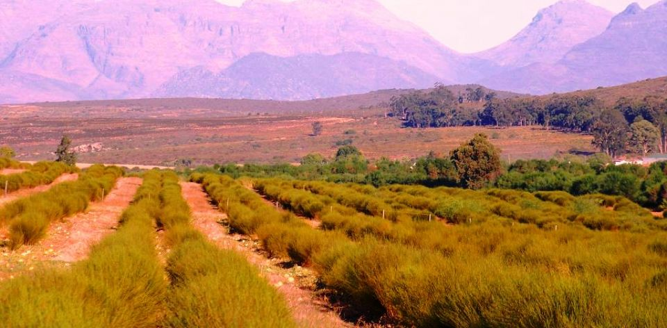 RT @FlysaaIndia: Take a tea tour in the Cederberg