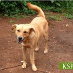 Those who keep asking about adopting dogs, @KSPCAKenya has beautiful souls waiting for a loving forever home https://t.co/e0DLY4RONz