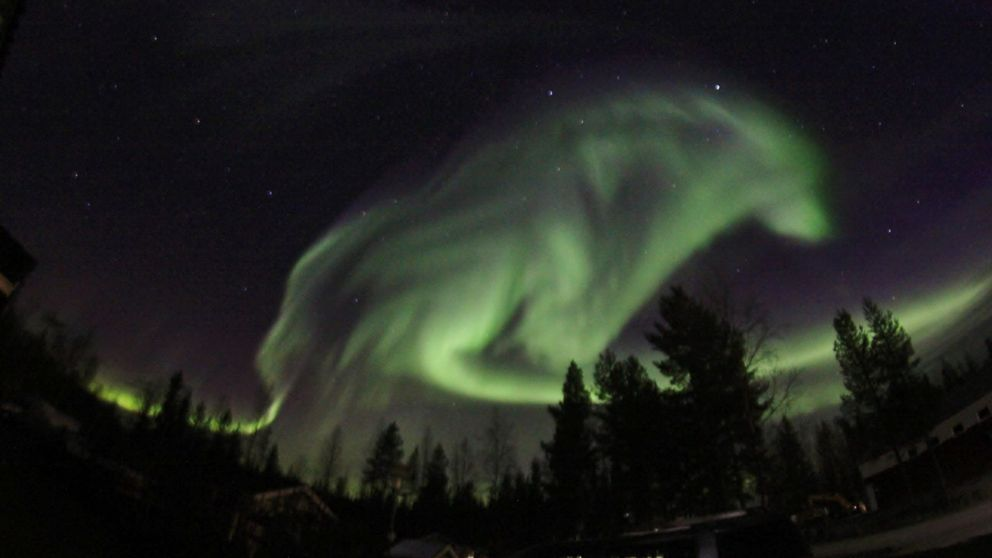 Aurora Borealis in the shape of a wolf. Taken in Pajala, Sweden https://t.co/M3Rcss65xD