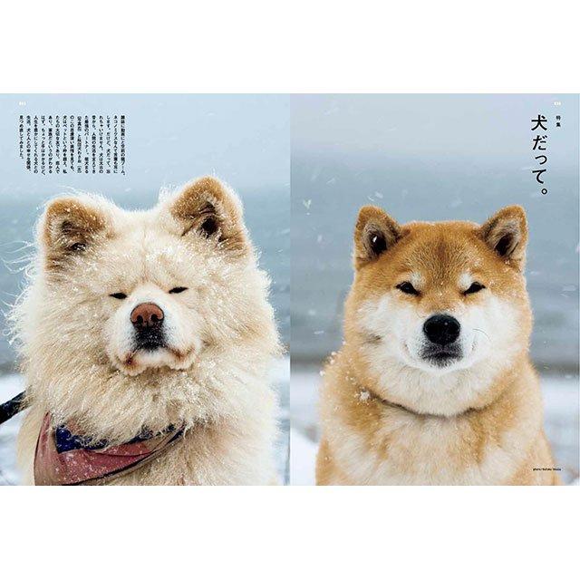 ということで、3/1発売の BRUTUS 誌( @BRUTUS_mag )では、柴犬まるさん ( @marutaro2000 ) と、#わさお が… ん? 誰か来たようだ… #wasao (画像は特集トビラページより) https://t.co/Nlp8zf6gZV