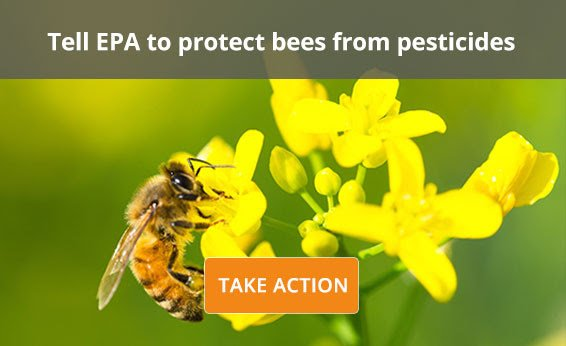 Act now & tell the EPA to put meaningful pollinator protections in place: https://t.co/s7lKhCRO0O #SaveOurBees https://t.co/5ufe270QNM