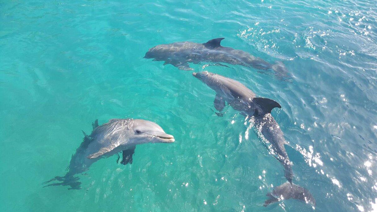 En grupo, la Semana Santa es más divertida #oceanworld #puertoplata