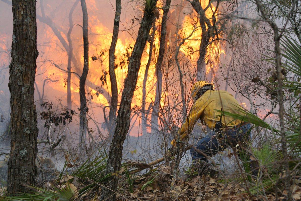 Los incendiosforestales ocasionan la destrucci n del for Habitat de la vienne chatellerault