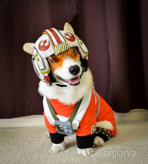 Red Leader standing by! #StarWars #dogs https://t.co/mHyXm2cQWS