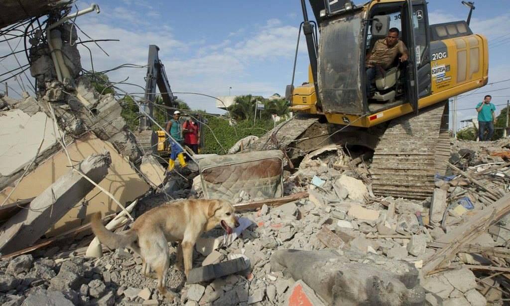 #SismoEcuador | Un llanto silencioso: los animales a los que también se les derrumbó todo. https://t.co/b5H3A1V8Zh https://t.co/yoW7WhwNTk
