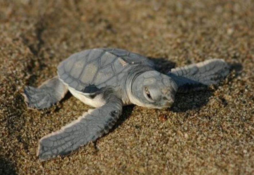 Cyprus is one of only a few places in the world where Green Turtles & Loggerhead Turtles nest. https://t.co/IUWdmTPrsz