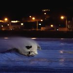 These guys at Lyall Bay lit the waves up with their car headlights for a twilight surf https://t.co/hCud7HNYNc