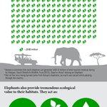 INFOGRAPHIC: Kenyas mega ivory burn and why Africas wildlife is #WorthMoreAlive https://t.co/qgJeHQkVuI https://t.co/4PrzWZyC74