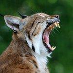 Hang in there, Bobcats! #TXST https://t.co/E527MIREzB