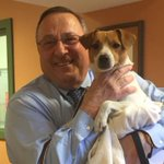 """Meet @Governor_LePages new dog. The Greater Androscoggin Humane Society says LePage has named him """"Veto"""" https://t.co/sVVkzQjC0A"""