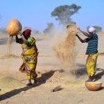 Le mil, perle nutritive de l'Afrique https://t.co/NONfowdG0k
