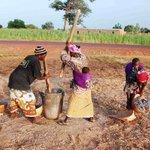 L'Afrique, principal producteur et consommateur de mil dans le monde https://t.co/YV5oyC3UIB