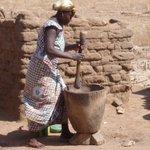Au Sahel, le mil représente une culture vivrière importante, et souvent la première céréale consommée. https://t.co/FGGebcWwTJ