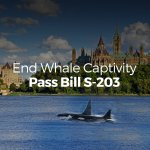 Lets end whale & dolphin captivity with Bill S-203! Pls sign & share this petition https://t.co/Xk59Zt3kVS #cdnpoli https://t.co/7TbdPDnyhj