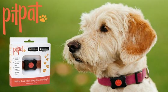 #FreebieFriday RT & follow for your chance to #win a PitPat Wearable Activity Monitor For Dogs! https://t.co/NfUp5Fo4NN