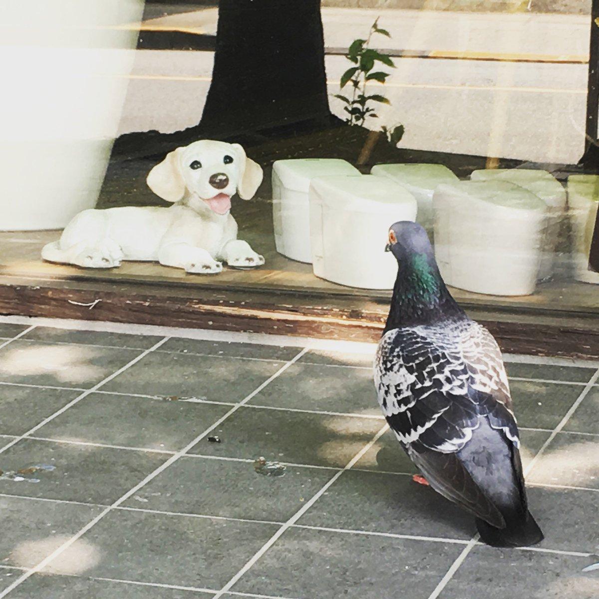 鳩が置物の犬を見ていた。  #多摩市 #聖蹟桜ケ丘 #鳩 #犬 https://t.co/XqWYlCjMnQ