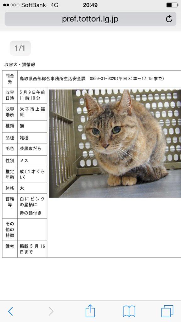 【鳥取県西部】5/7 #米子市西福原で保護。#米子警察署  猫 1歳程度 キジトラ模様茶黒まだら ピンクの星柄に鈴付きの首輪あり。 ※5/16 掲載期限 飼い主様、このコはここにいますよ!(>_<) #迷い猫 #迷子猫 #拡散希望 https://t.co/gVJwpXdIpJ