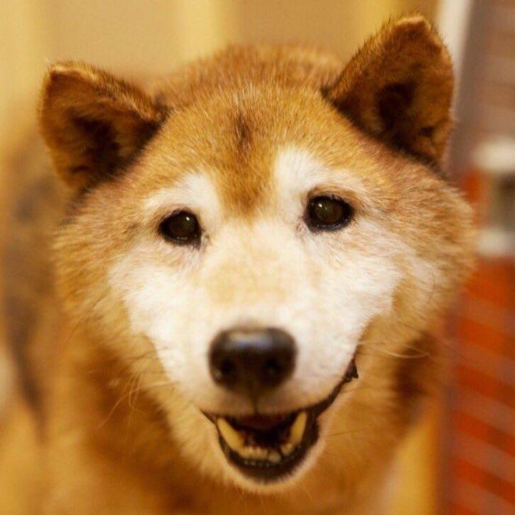 ヨネさんがお空へと旅立ちました。 まだまだ若いもんには負けてられん!とミグノンの老犬代表として頑張り続けてくれたヨネ爺。NHKの72時間でも主役をはってくれたよね。 ヨネさん卒業!ヨネさん、ありがと! お空の上で元気でね。 https://t.co/ZJJaczAQcc