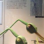 食虫植物は知っているがこれは知らなかった… 虫を監禁して養う植物らしい https://t.co/LbgZIBrX09