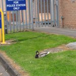 Seen the new Guard bat Solihull Police Station?  #DontMessWithTheDuck   @SolihullUpdates  @WMPolice https://t.co/PyCxz6fSa7