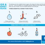 Do you know the main 3 functions of your #kidney? Check this graphic out to find out! #ourkidneystory #bcpoli https://t.co/y3AbGq2Caa