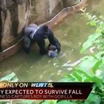 Gorilla shot dead at zoo after dragging around boy (4) who fell into enclosure https://t.co/vCZO3XTVjt https://t.co/EbiNfdQzJ5