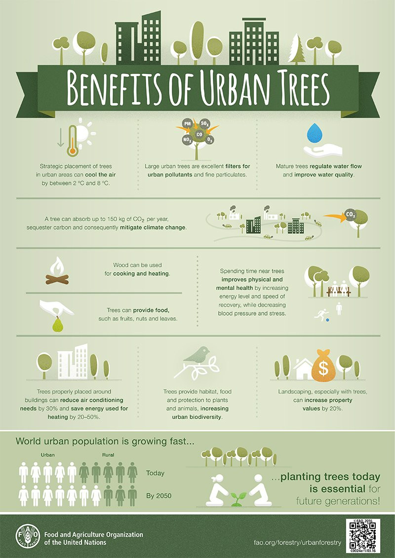 Large trees are excellent filters for urban pollutants and fine particulates. #UrbanForestry via @FAOForestry https://t.co/DjNUiAOmSu