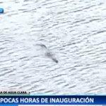 #NuestroCanalNuestraGente Lagarto visita la nueva esclusa de Agua Clara en Colón y las cámaras de TVN lo captan. https://t.co/dGM6Lpmx3K