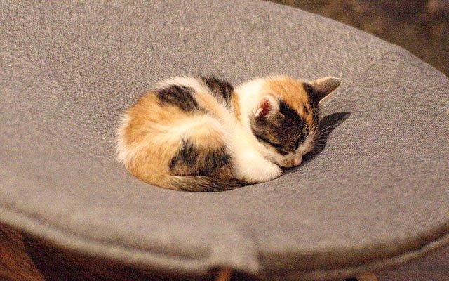 泊まりに行きたい RT @grapeejp: 殺処分されるかもしれない猫を救う! ステキな発想から生まれた「猫庭」が完成しました #grape https://t.co/b0fMoMiEt8 https://t.co/kQnkfTWnG4