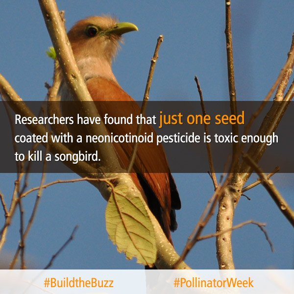 Birds, butterflies, & bats are important pollinators & are being harmed by pesticides. #pollinatorweek #BuildtheBuzz https://t.co/78tVT623iX