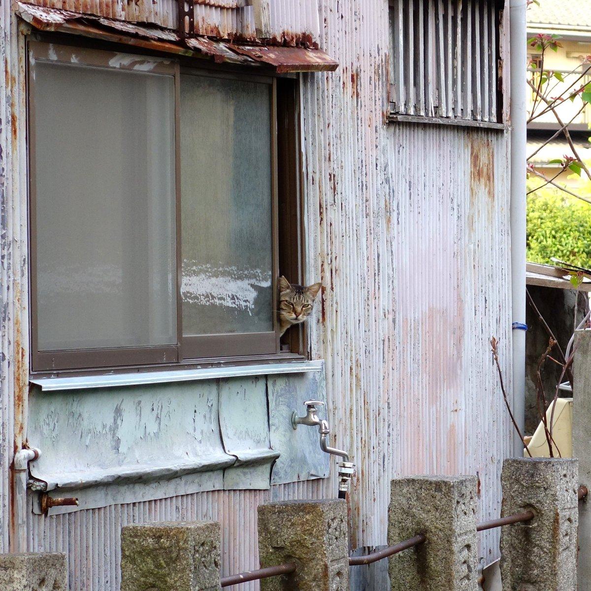 散歩中 背後から何かの視線を感じ振り返ると 誰も住んでいないはずの古びた家の窓から 明らかに人間ではない者が こちらをジッと見つめていたのです…。 https://t.co/edqNQJD9ly