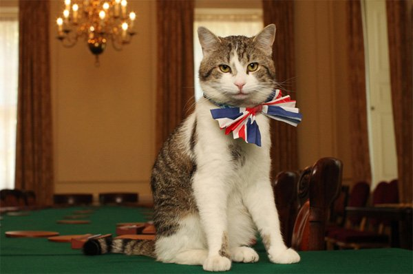 The most talked about figure in British Politics today #LarryTheCat https://t.co/Gr6DTKlYdT