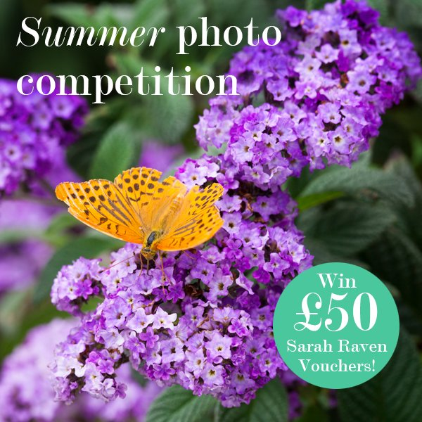 Enter our summer photo competition to win £50 gift vouchers. Click below for more details... https://t.co/7gYmBvWFZy https://t.co/30fwH5MgTz