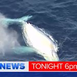 Familiar white whale spotted off the coast of Queensland .. or is it? See the vision & hear the theories #9NewsAt6 https://t.co/K86FpyOGCS
