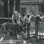"""#ThrowbackThursday: Lining up to pet one of the miniature donkeys of """"Wengs Zoo"""" in 1949! #Dayton #TBT #history https://t.co/tSU5Pe73vZ"""