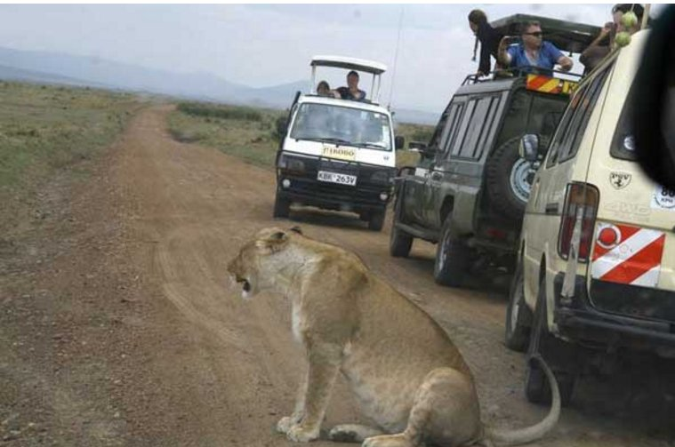 Kenya has potential to attract 5m visitors yearly, says tourism boss