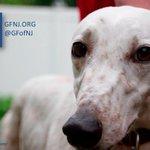 Image of adoptagreyhound from Twitter