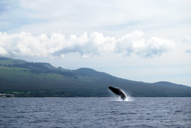 Maui has many sights to see. Here's our top five: