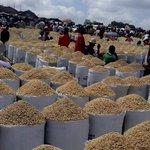 This is a Rice market at Yauri, Kebbi State, #Nigeria. @jag_bros @JackObinyan @Omojuwa @Ayourb @ayomidiran. https://t.co/kSyiFnTZPG