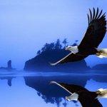 "🇺🇸🌹#eRD🍒☞  | ➤ ""Anger Eagle Bird""   | ➤ @koji2530112 @TorontoBlonde   | ╰⇢🔻 ☞🍒@jlferguson50 💫 @eReferenceDesk 💯🔙👥 https://t.co/iF2jjak8eF"