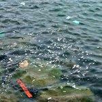 Hay que ser bien aweonao para ensuciar el mar..  #Antofagasta https://t.co/7WIV9WZby9