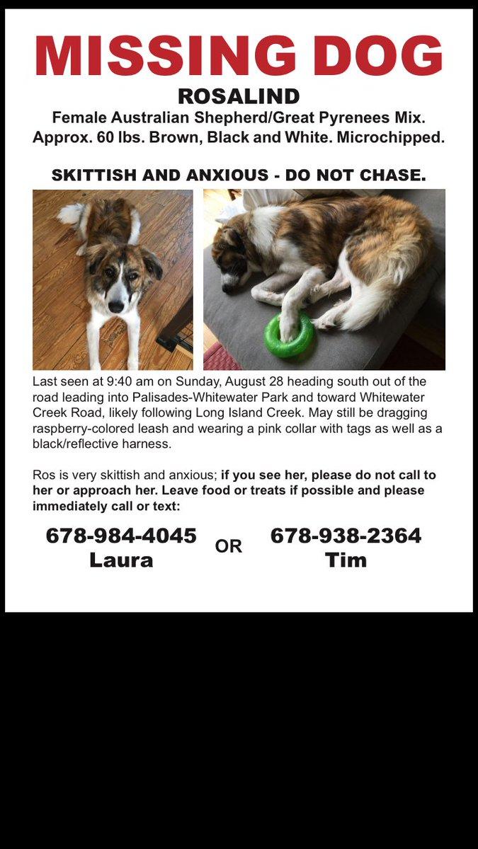 #buckhead #atlanta Missing dog Rosalind. Last seen Sun: Palisades Whitewater Park. Skittish. Pls help & share. https://t.co/KU0IPSvaEW
