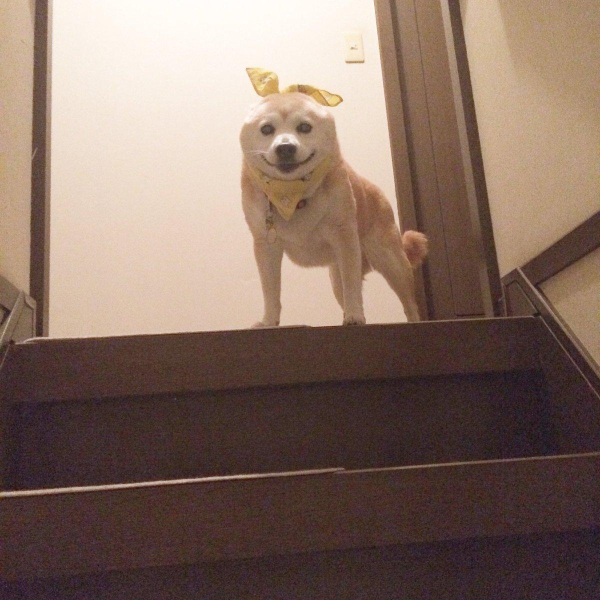 階段の上で待ち構えているこのならちゃんを撮ろうとして笑ってしまって手が震えた