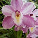 En Arribo Internacional del #AeropuertoUIO podrá encontrar una gran variedad de orquídeas #Ecuador #PaísdeOrquídeas. https://t.co/mbk9XHL8TY