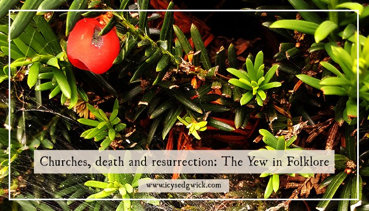 Churches, death and resurrection: The Yew in Folklore https://t.co/AS8tRXXalP #FolkloreThursday https://t.co/6hZDd1plsx