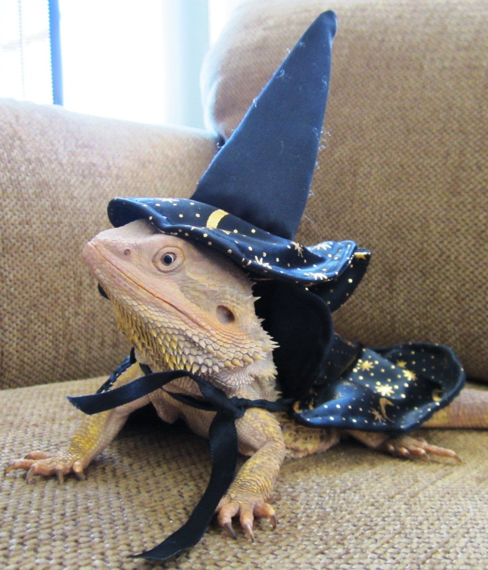 "PSA: Doing a google image search on ""lizards in hats"" will elevate your mood. We could all use it. https://t.co/k0jsoF5wht"