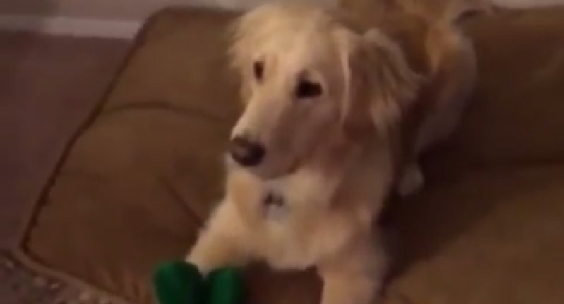 This dog loves her favorite Gumby toy – so her humans gave her a surprise https://t.co/E3bS8tNnEl https://t.co/zTBnYOBswb