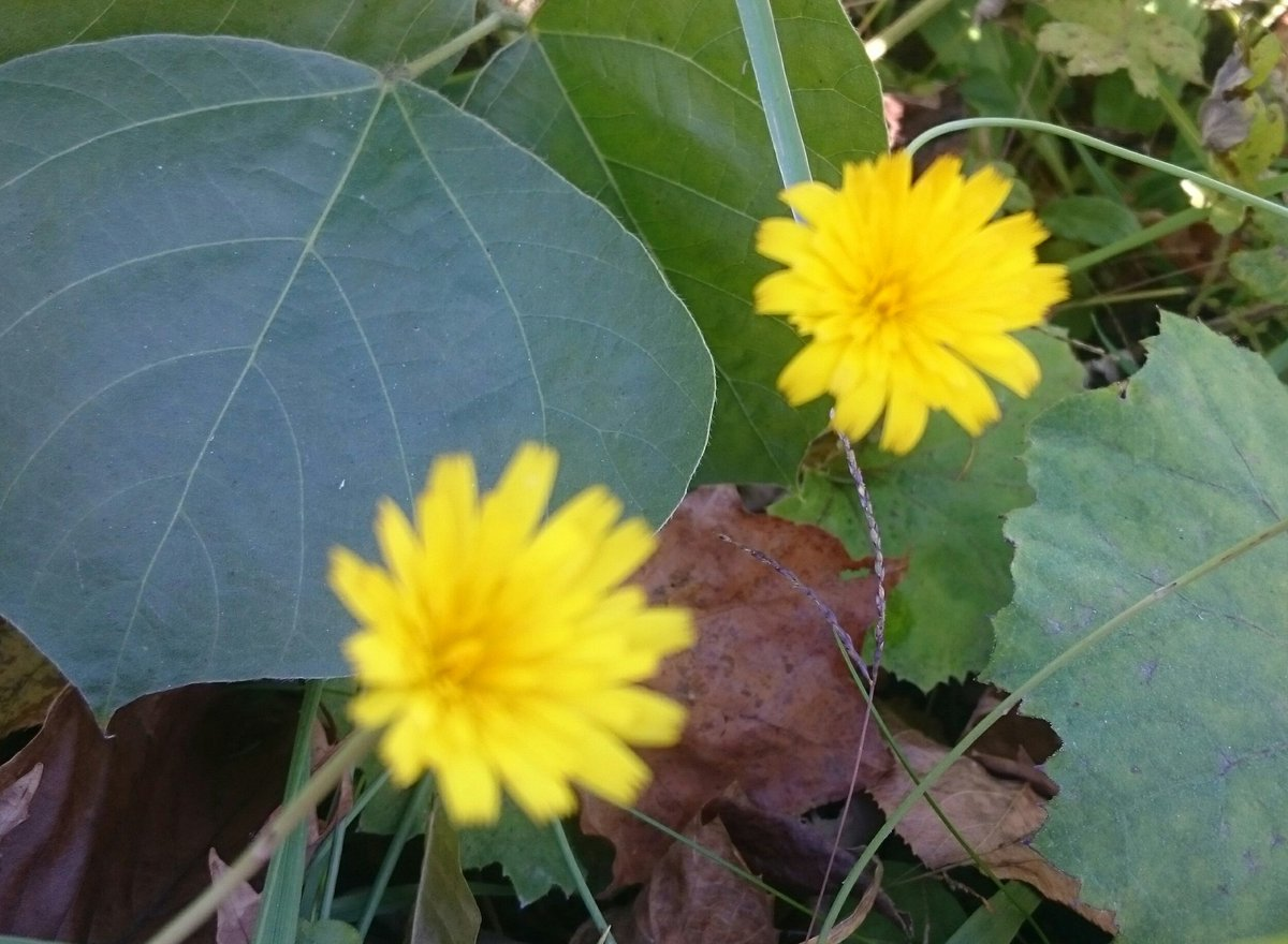 おはようございます今日も良い天気~☀︎サザエさん風に(笑)誰も気づかないような場所でお花を発見❀今日も頑張っていこうヾ(