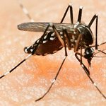 Zika no longer a world public health emergency: WHO